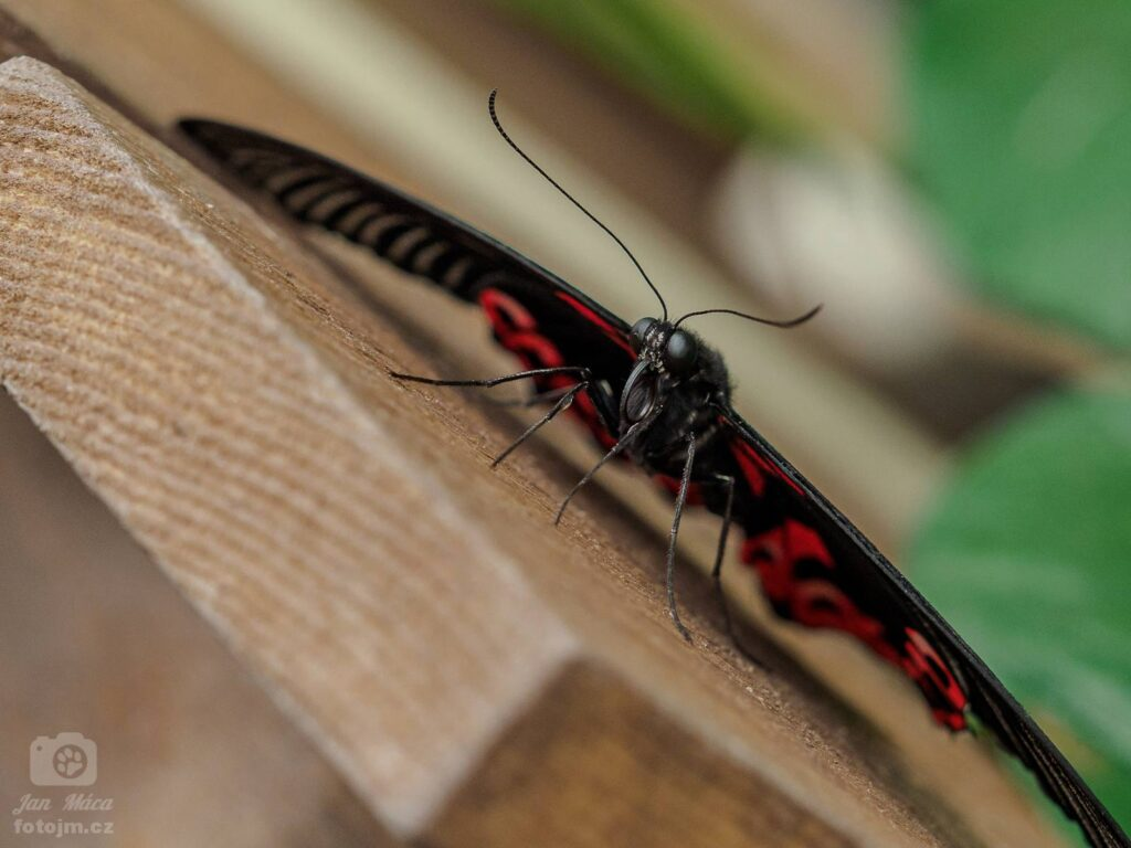 Motýlí dům Papilonia Brno